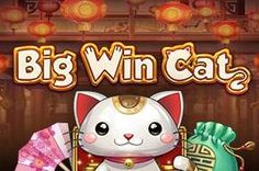 Have you tried playing Big Win Cat Gambling Sites, Online Gambling, Cat Online, Online Casino Slots, Hello Kitty, Casino Games, Activities, Play, Cats