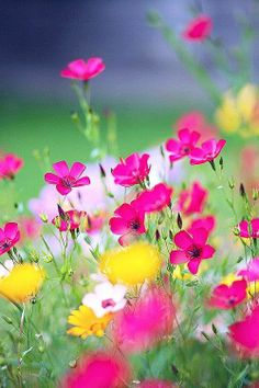 """bellasecretgarden: """" (via Flower field - this is one of the most gorgeous flower photos I've seen! Amazing Flowers, Pretty Flowers, Wild Flowers, Spring Flowers, Spring Wildflowers, Field Of Flowers, Cosmos Flowers, Meadow Flowers, Colorful Flowers"""