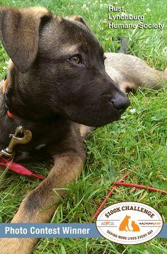 Shelters, Dog Photos, Humane Society, Photo Contest, Dog Cat, Adoption, Cute Animals, Challenges