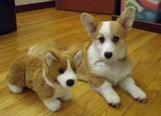 33 animals with stuffed versions of themselves. Stop it, this is too much cuteness for this world!