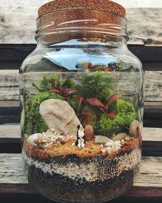 Terrarium Scene, Terrarium Jar, Build A Terrarium, Terrarium Plants, Succulent Terrarium, Succulent Gardening, Succulents Garden, Indoor Gardening, Tiny Garden Ideas