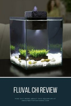 """""""The Fluval Chi II is a beautiful glass 5-gallon tank and is by far one of my favorites. Don't get me wrong, there are a few things that I think need improvement (which I'll get into in a minute), however as a whole I think it is a great tank. Keep reading for our Fluval Chi Review."""""""