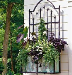 Container Care  Blooming window boxes require a balance of well-drained soil that also retains moisture and fertilizer for growth.