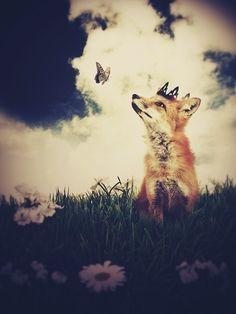 Fox Print, The Little Fox Prince, 5x7 Inch Print, Fox Art. $10.00, via Etsy.