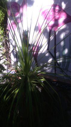 Plantas, luz, sombras y pintura Ara.M.M