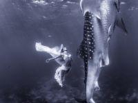 Extraordinary fashion shoot involves whale sharks, world's largest fish