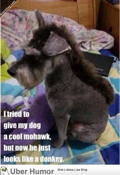Poor donkey..I mean dog..LOL If you love dogs, check out http://thedogbreedsbible.com/