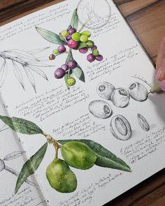 pen and wash sketching Nature Illustration, Watercolor Illustration, Watercolor Art, Nature Sketch, Nature Drawing, Botanical Drawings, Botanical Prints, Illustration Botanique, Nature Journal