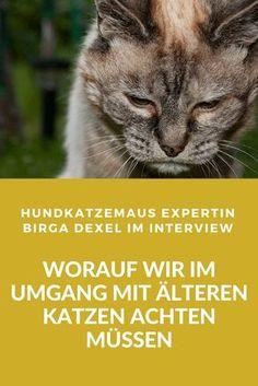 Ab wann gelten Katzen als alt und welche besonderen Bedürfnisse haben alte Katzen? Antworten gibt Birga Dexel, bekannt von hundkatzemaus (VOX)