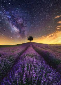 Enantiodromija — The Lavender Field and Milky Way by Jesús M. Beautiful Sky, Beautiful Landscapes, Beautiful World, Beautiful Places, Lavender Garden, Lavender Flowers, Lavander, Purple Roses, Space Photography