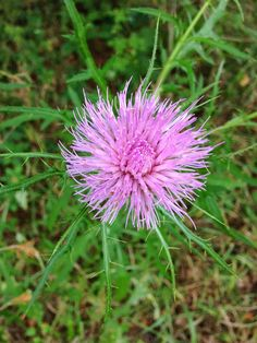 10 Ideas for Fall Flower Hunts {from @outsidemichiana}