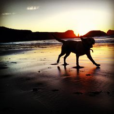 Beach dog @ Big Sur sunset chase. Photo by leather-n-lace