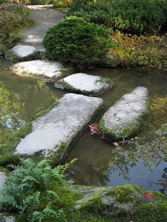 Steps across stream in Japanese Garden in Seattle. Photo by Taryn Koerker Japanese Garden Plants, Back Gardens, Water Garden, Garden Landscaping, Seattle, Pond Ideas, Walkways, Places, Landscapes