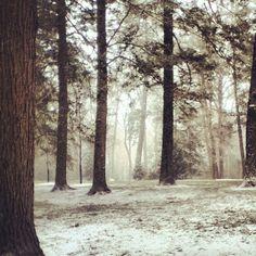 Peirce's Park at Longwood Gardens #snow #magical