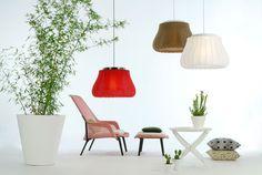 Lily lamp, Fambuena