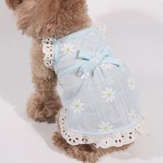 Lovely Daisy Flower Pattern Ribbon Summer Dog Dress – Famous Last Words Yorkshire Terriers, Summer Dog, Spring Summer, Dress Summer, Cute Dog Clothes, Girl Dog Clothes, Daisy Dog, Dog Clothes Patterns, Sewing Patterns