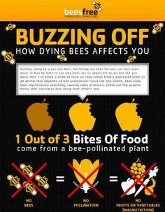 Save the bees!