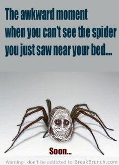 950d6e775117066adc42db3ac875b971 spider humor funny spider the sad world of the misunderstood house spider spider meme