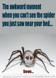 Google Image Result for http://breakbrunch.com/wp-content/uploads/2012/05/those-scary-moment-spider.jpg