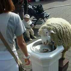 What the freak?! #30 | WTF.nl - Blijf je verbazen