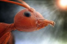 Incredible creatures up-close - Yudy Sauw/Solent News/REX