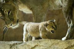 Filhotes fofos de setembro 2012
