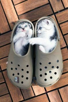 I hate Crocs... But these kitties make them better.