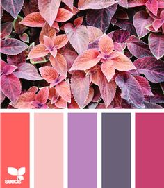a range of botanical purple, magenta, & coral from design seeds. Gorgeous color combo