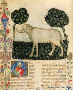 """Elefante. Dal codice """"Historia Plantarum""""(o Tacuinun sanitatis) della Biblioteca Casanatense di Roma (ms. 459) - Lombardia, fine del XIV secolo"""