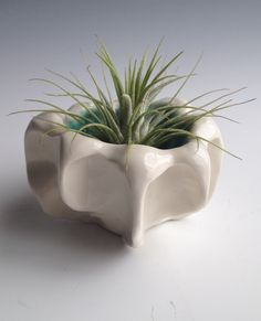 Top view of Air Plant and Pinch PotSingle Plant and PotPinch Pots with Air Plants Ceramic Pinch Pots, Ceramic Mugs, Ceramic Bowls, Slab Pottery, Pottery Vase, Ceramic Pottery, Clay Bowl, Wheel Thrown Pottery, Sculpture Clay