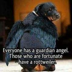 Rottweilers make good guardian angels