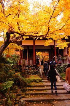Jojakkoji Temple, Arashiyama, Kyoto, Japan