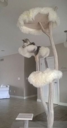 A cat tree ... Straight outta dr.suess