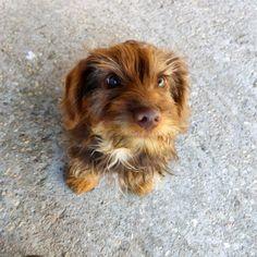 Pequeño amigo. #dog