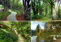 Medellin y sus senderos ecologicos
