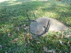 Deer antlers forged from crane cable.
