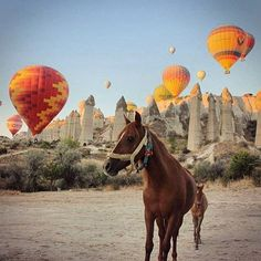 Who's up for a balloon ride? #TLPicks courtesy of @woopwooptravel by travelandleisure