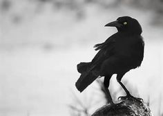 "Crow is the keeper of the Sacred Law, for nothing escapes their keen sight.   Crow is appearing for you to beckon you to begin to use your ""second sight""  www.UniverseofSymbolism.com"