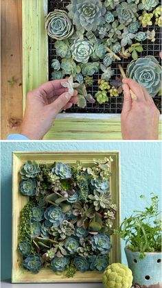 succulent frame DIY