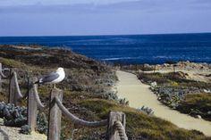 Asilomar Beach Pacific Grove California  SO LUCKY TO LIVE HERE!!