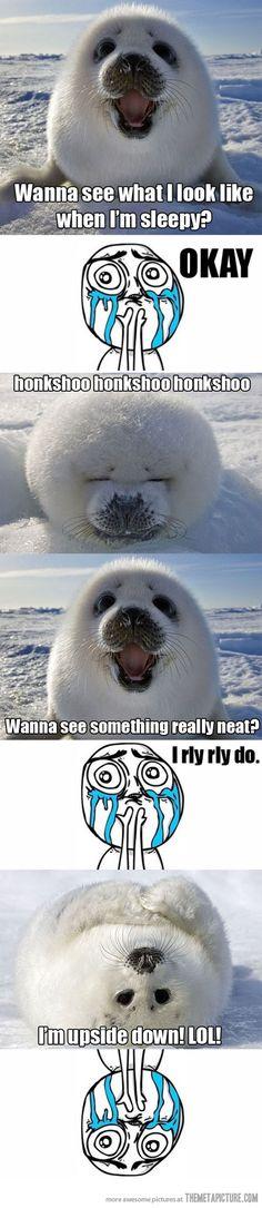 Baby seals are so adorable.