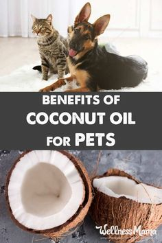 There are many ways to use coconut oil for pets to improve health and soften their coats. Most animals love coconut oil so it's easy to add it to their diet.