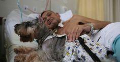 #Los perros podrán visitar a su dueño en hospital de Ibiza - EL DEBATE: EL DEBATE Los perros podrán visitar a su dueño en hospital de Ibiza…