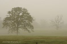 Foggy Morn'n, via Flickr.