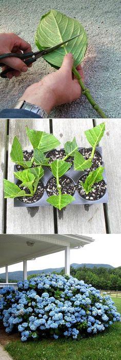 Engelstalige uitleg hoe je hortensia vermeerder door takken te poten Backyard Garden Design, Terrace Garden, Garden Landscaping, Modern Backyard, Garden Oasis, Flowers Garden, Planting Flowers, Garden Plants, Vegetable Garden