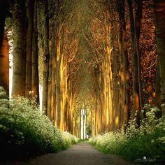 Tunnel di alberi, Olanda