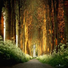 20 Magical Tree Tunnels You Should Definitely Take A Walk Through | Bored Panda