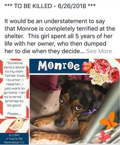 MONROE TO DIE 06/26/18***MONROE IS CODE RED AT NYC ACC she is only 5 yrs old and only knows her family and is so scared at the shelter life but who wouldn't be?? Please someone if you can adopt or foster Monroe please go get her before they kill her shes a good girl & doesnt want to die
