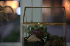 snail terrarium Terrarium Containers, Glass Terrarium, Terrarium Ideas, Planter Ideas, Terrariums, Reptile Habitat, Flower Planters, Garden Planters, Box Houses