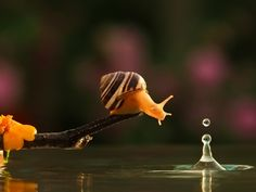 The Magical World of Snails | Earthly Mission